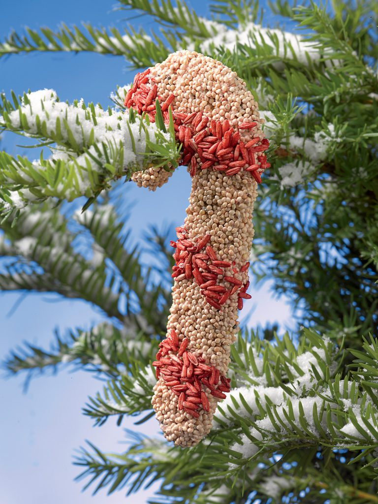 holiday candy cane birdseed